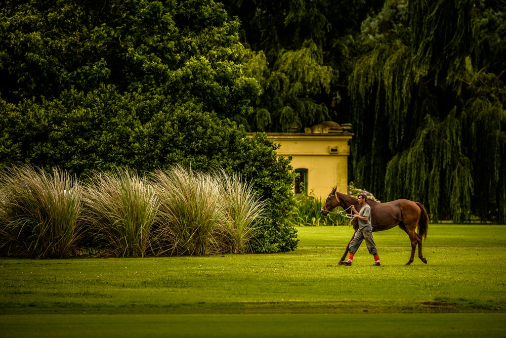 Polo horse and groom in poloclub